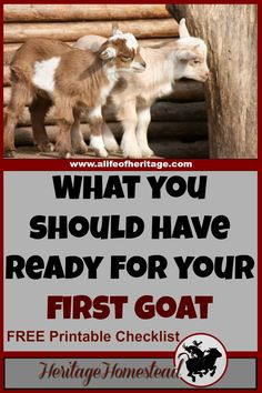 Goats | Care for Goats | Goat Care | Before bringing home your first goat. As your goats get settled, you will compile this list and more to keep your goats happy and healthy!