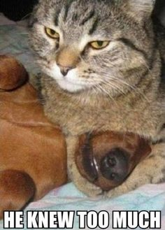 funny animal memes funny animal memes animal pictures with captions funny animals Animal Captions, Animal Jokes, Funny Animal Memes, Cute Funny Animals, Funny Animal Pictures, Funny Cute, Funny Dogs, Cute Cats, Dog Pictures