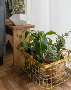 A bench made of scrap wood from a DIY project is a perfect place for displaying even more plants. Home Flower Decor, Flower Decorations, Old Apartments, Veg Garden, One Bedroom Apartment, Indoor Plants, Indoor Gardening, Cozy Place, Green Plants
