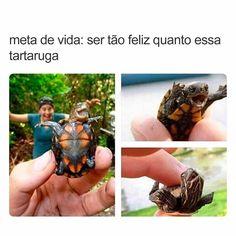 Eu tbm, (impossível) por mais que eu tente eu sempre estarei infeliz, e mesmo que eu fosse feliz!.... N seria mais que essa tartaruga :,) Wtf Funny, Funny Memes, Hilarious, Meme Internet, Just Smile, Cute Funny Animals, Best Memes, Funny Photos, Geek Stuff