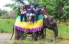 We are a specialist Sri Lanka destination management company specialising in Wildlife Safari Tours and Holidays in Sri Lanka. Wildlife Safari, Sri Lanka, Habitats, Tours, Management Company, Adventure, Pictures, Travel, Holidays