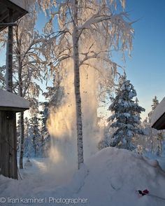 Falling snow...Lapland Finland