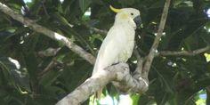 Tertarik Mengamati Burung? Datanglah Ke Flores - http://darwinchai.com/traveling/tertarik-mengamati-burung-datanglah-ke-flores/