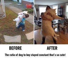 Dog to boy ratio