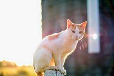 Via @theonetheonlyelly on Instagram   ( #photography #photo #art #cats #cat #kitten #kittens #animal #animals #golden #hour #sunset #sunrise #sun )