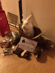 Subscribe for months of treats at a great price Treating your bun/cavy couldn't be easier >