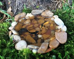 Koi Pond, Small