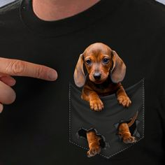"""Excellent """"dachshund puppies"""" detail is offered on our site. Dachshund Breed, Long Haired Dachshund, Funny Dachshund, Mini Dachshund, Cute Puppies, Cute Dogs, Corgi Puppies, Miniature Dachshunds, Weenie Dogs"""