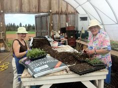 My faithful transplanters. I wouldn't be able to do it without these two wonderful women!