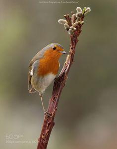 Robin #PatrickBorgenMD