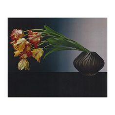 Robert Mapplethorpe Parrot Tulips Journal