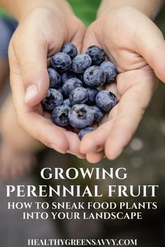 Growing fruit is easy and econmical -- plant once and eat free for years! Learn about the huge variety of fruit plants to choose from and how to incorporate them into your existing landscape.