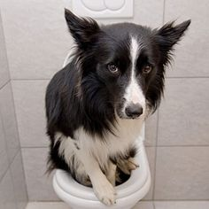 Canine Urinary Tract Infections