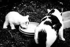 Kuriose Feiertage 28. März Respektiere-Deine-Katze-Tag – der amerikanische Respect Your Cat Day (c) 2016 Sven Giese-1