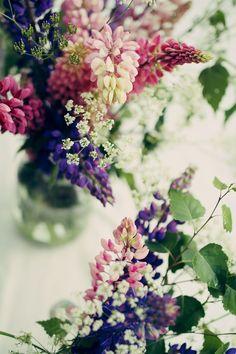 quite typical summer flowers from Scandinavian fields Flowers Nature, Fresh Flowers, Wild Flowers, Beautiful Flowers, Summer Flowers, Flower Bomb, My Flower, Planting Flowers, Floral Arrangements