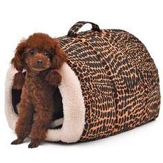 2016 New Product for Pet Bed Leopard Dog House Cat Cushion Pet Home High quality Soft Bed for Cat Print Puppy Mats Cheap Dog Beds, Cheap Pets, Dog Beds For Small Dogs, Gifts For Pet Lovers, Pet Gifts, Dog Lovers, Pet Dogs, Dog Cat, Cat Cushion