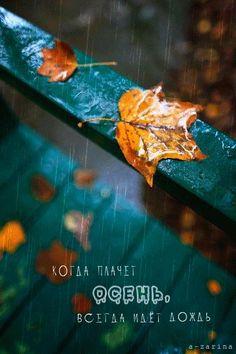 Когда плачет осень, всегда идёт дождь, Осень картинки