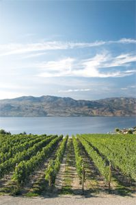 Quail's Gate | Okanagan Estate Winery #Kelowna #wine
