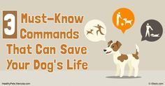 Dog should be trained to respond to these three basic commands in particular, because they can be used to avert disaster and could even save your pet's life. http://healthypets.mercola.com/sites/healthypets/archive/2016/10/03/basic-dog-behavior-training.aspx