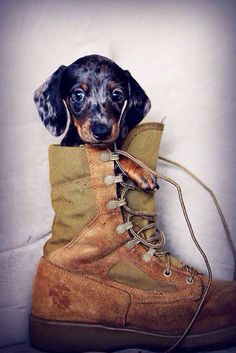 """""""There is just something special about a nice boot."""""""