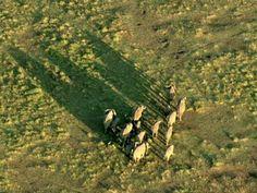 Shadow of elephant family