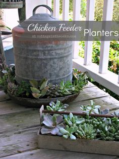 Hen and chicks (and other succulents) in a chicken feeder... love it!