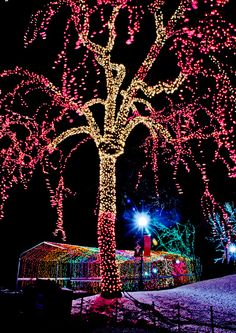 Week 51 - Zoo Lights by alyshathompson, via Flickr