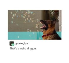 I'm pretty sure bout this one that it's actually a bubble breathing dragon