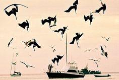 https://flic.kr/p/8HMM9 | Raining cats and... pelicans | Just before sunset, the Pelicans get crazy and fish like kamikaze pilots. Very impressive. (Venezuela, Los Roques, October 2003) ================================================================ Quand une promenade de beau'f au bord de la plage se transforme en happening hitchcockien...