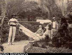 Jardín Botánico. 1905. Puerto de la Cruz.