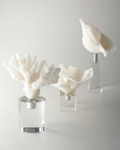 -48VZ John-Richard Collection White Coral and Shell Sculptures