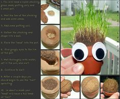 Homemade Chia Pet