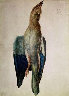 Albrecht Dürer, Blue Crow, 1512