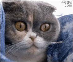 猫のgifではこれが一番ということは決まったっぽいけど : 【2ch】コピペ情報局