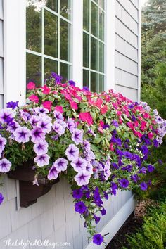Box Tips - my former black thumb - The Lilypad Cottage Easy window box tips from planting to watering. How to keep those flowers looking gorgeous!Easy window box tips from planting to watering. How to keep those flowers looking gorgeous! Window Box Plants, Window Box Flowers, Window Planter Boxes, Planter Ideas, Balcony Flowers, Petunia Tattoo, Petunia Flower, Petunia Plant, Annual Plants