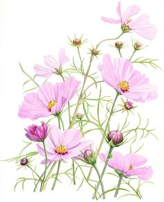 http://www.soc-botanical-artists.org/artist/penny-gould/