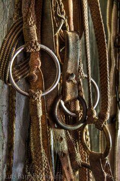 Aperos Rio Grande Do Sul, Horse Adventure, Horse Halters, Leather Carving, Saddles, Horse Tack, Dna, Equestrian, Branding Design