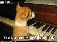 funny+musical+pictures | Funny Animal Feel Better Pictures More animal themed music can