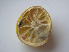 Ne jetez plus le citron ! - Astuce du jour - Marcia 'Tack
