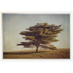 """East Urban Home 'Windward Tree' Photographic Print Format: Collins White Framed, Matte Color: Bright White, Size: 16"""" H x 24"""" W"""