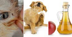Receta natural para librar a sus mascotas de pulgas y garrapatas - e-Consejos