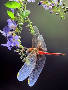 Not a butterfly but too pretty not to pin. A beautiful dragonfly Beautiful Bugs, Beautiful Butterflies, Beautiful World, Flying Insects, Bugs And Insects, Beautiful Creatures, Animals Beautiful, Mantis Religiosa, Photo Animaliere