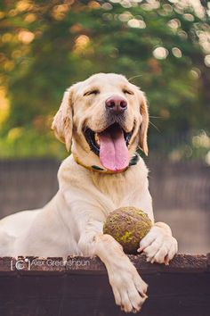 Happiness is a big, muddy tennis ball.