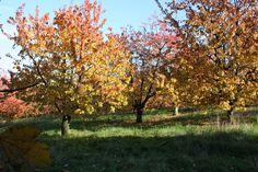Im Goldrausch - Wie du deine gesammelten Schätze auf lange Zeit bewahrst Raus in die Natur, mit der ganzen Familie auf Schatzsuche gehen, das ist kaum zu einer anderen Jahreszeit sooo spannend. Nur der Herbst lässt uns wieder ganz zu Jägern und Sammlern werden. ... Schnell haben wir einen bunten Herbstlaub Strauß gesammelt. Noch sind die Blätter weich, haben tolle Farben und Formen. Meistens sind wir aber schon am nächsten Tag ... Weiterlesen: http://ow.ly/BkEbe