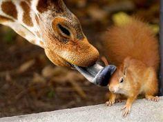 squirrel and giraffe best friends