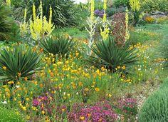 Unusual Lawn Alternative: without fences - Peter Gaunitz Landscape Design: Become more dynamic