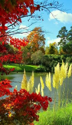Gardening Autumn - - With the arrival of rains and falling temperatures autumn is a perfect opportunity to make new plantations Beautiful Nature Pictures, Amazing Nature, Nature Photos, Beautiful Landscapes, Nature Nature, Flower Landscape, Landscape Art, Landscape Paintings, Landscape Photos