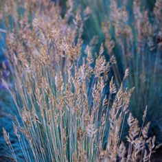 Magda Wasiczek / Collection_collection_arboretum-trojan-w-lato Photography Portfolio, Fine Art Photography, Ornamental Grasses, Delicate, Gallery, Flowers, Plants, Summer, Beautiful