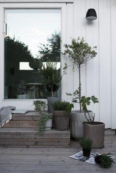 I går satte jeg igang med runde nummer to med planting i krukkene ute på terrassen. Å holde på med hage i litt mindre skala er fint, og krukkene holder lenge for meg. Når var det på tide på å skifte u