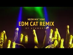 EDM Cat Remix by Ashworth - YouTube absolutely hilarious! !!